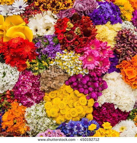 imagenes jpg flores 325 im 225 genes de flores gratis en freejpg
