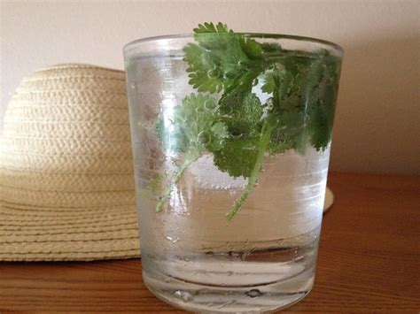 Cilantro Tea Detox by You Problems With Kidney Stones Here Is How To