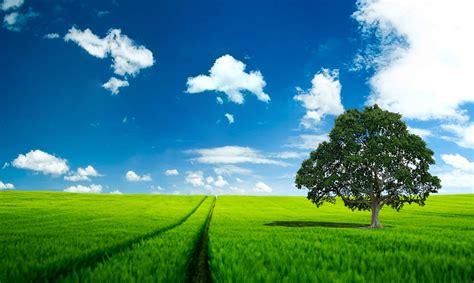 fondo pantalla prado naturaleza fondo pantalla paisaje bonito prado y arbol