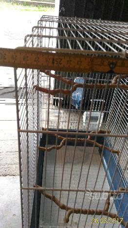 gabbia cocorite cocorite con gabbia e nido posot class