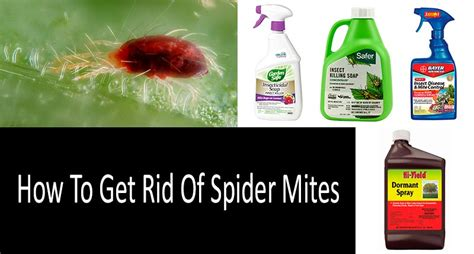 How To Get Rid Of Dust Mites In Your Mattress by How To Get Rid Of Dust Mites In 5 Steps