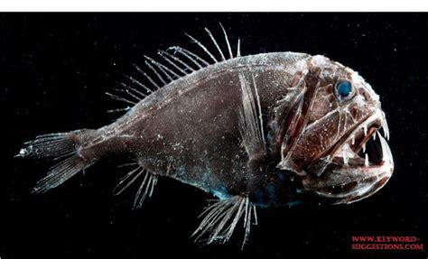 download mp3 gigi ikan laut 21 jenis ikan laut dalam paling menyeramkan predator dan