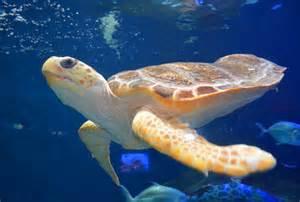 La Jolla Light Turtle Tales Birch Aquarium Series Explores Turtles La