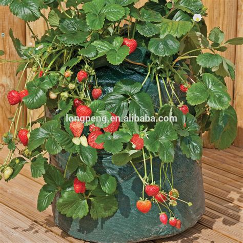 Strawberry Planter Pots by Strawberry Grow Bags Pots And Planters For Strawberry