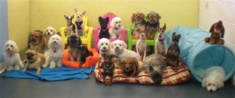 dog attack news dog daycare dog boarding and dog first dog daycare to open in zagreb