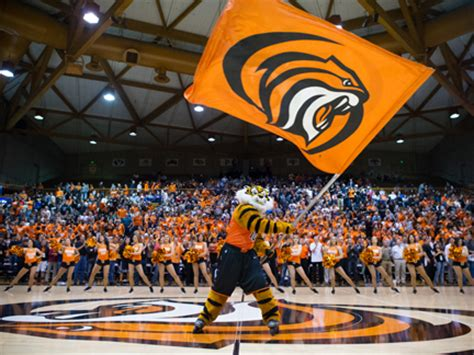 Cost For Mba At Of The Pacific Stockton Ca by Pacific Tiger Athletics