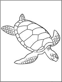 color of turtles free coloring pages of baby turtle