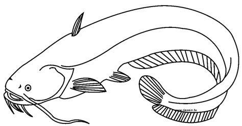 gambar mewarnai ikan lele  anak anak contoh anak paud