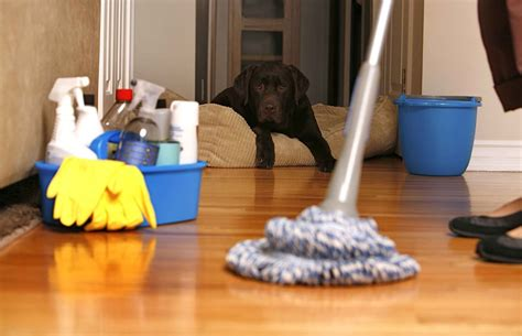 keeping your house clean tips to keep your house clean with petsepet blog