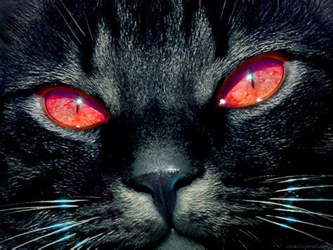 black cat follow the piper black cats