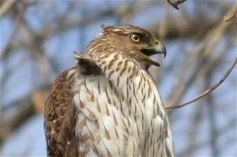 curious what this bird of prey is