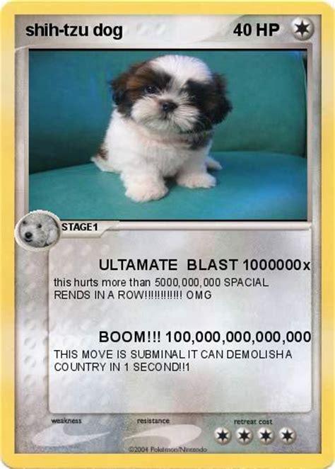shih tzu language pok 233 mon shih tzu ultamate blast 1000000x my card