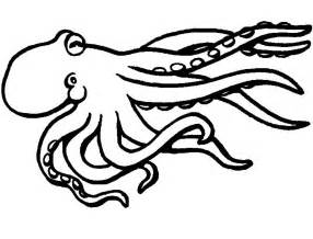 Squid Coloring Page squid coloring pages to and print for free
