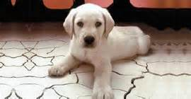 westchester puppies and kittens westchester puppies kittens licensed pet dealer