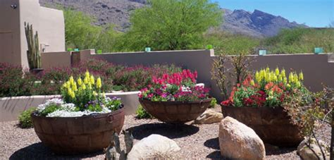 container gardening arizona residential potted gardens the contained gardener tucson