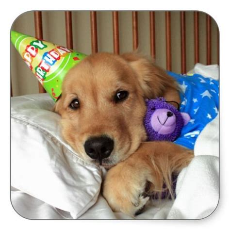 happy birthday golden retriever happy birthday pictures or with golden retrievers breeds picture