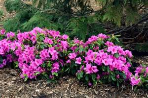 Flowers For Shade Gardens Great Plants For Shade Gardens Hgtv