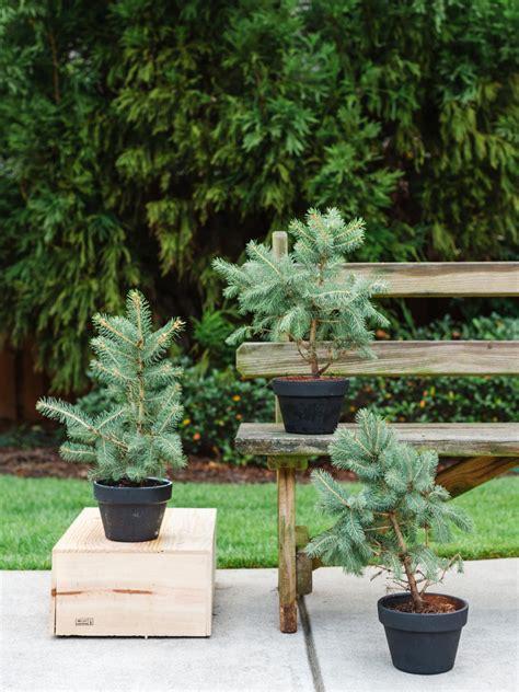 winter friendly patio plants landscaping ideas and hardscape design hgtv