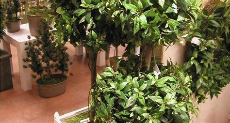 piante ornamentali da interno finte piante e fiori artificiali piante finte piante e fiori