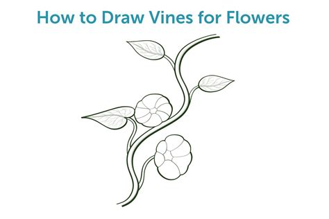 Drawing Vines by How To Draw Vines For Flowers With Pictures Ehow