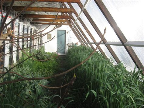 Barn With Apartment Plans The Passive Solar Greenhouse Current Greenhouse Photos