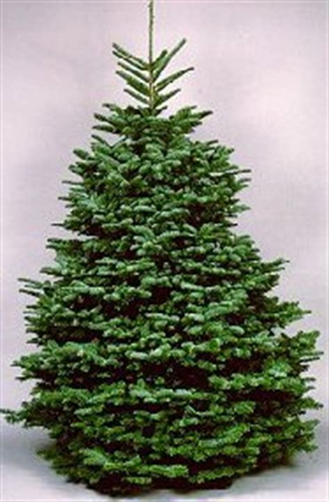 types of live christmas trees types and names of live trees