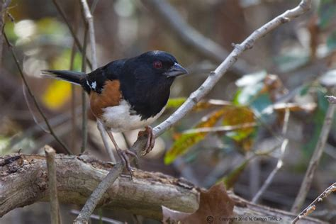 friends of santee national wildlife refuge