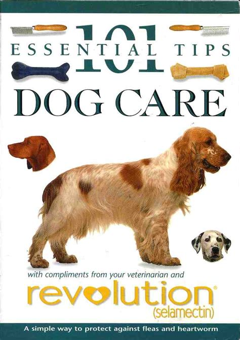 puppy care 101 101 essential tips care