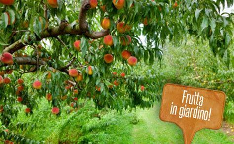 fiori alberi da frutto alberi da frutto per giardini 5 piante per chi ha poco
