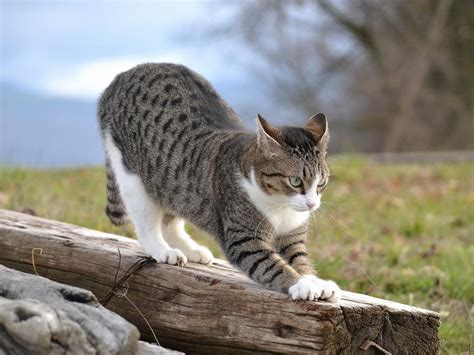cute animal wallpaper  funny cat  action hd
