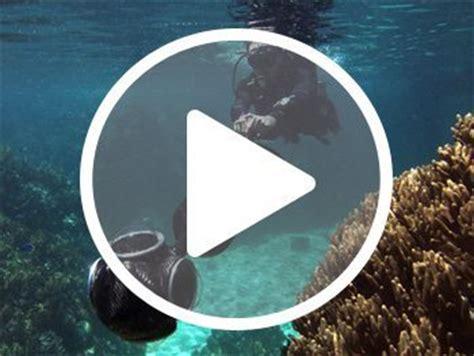 google street view photos ocean life, provides 360 views