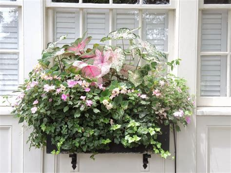 window box ideas for shade 196 best window boxes images on pinterest flower boxes