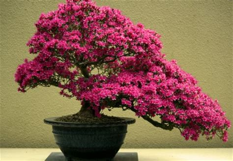 Bonsai Pink pink bonsai jigsaw puzzle