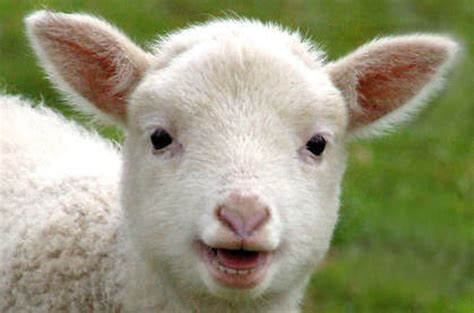 lambs and l the lambda that roared amazon unveils event driven aws