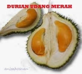 Lu Strobo Bulat Isi 2 anim agro technology varieti durian part 5
