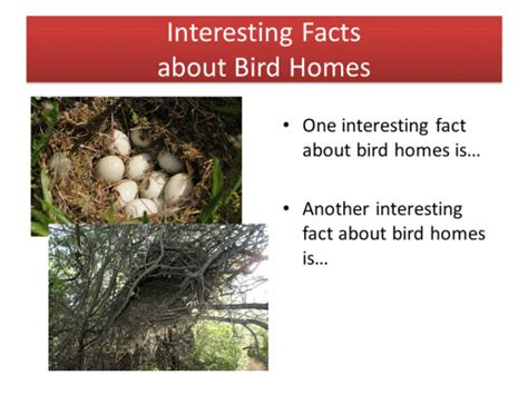 animal homes birds powerpoint activity k 5 computer