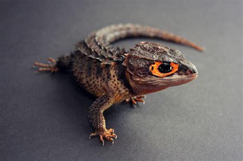 My Reptile Wish List | ReptiFiles
