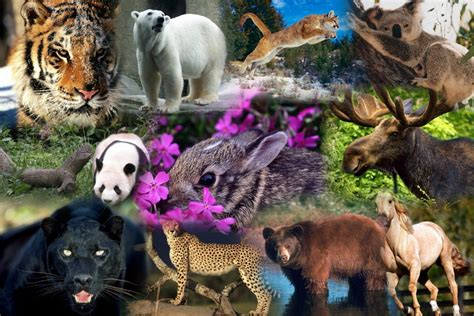 imagenes sorprendentes de animales salvajes felinos diario animales part 4