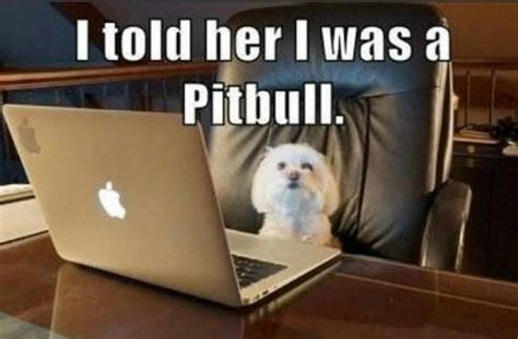 Online Dating Meme - 4 brave and real singles let their dog write their