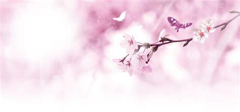 sfondi fiori di pesco il sogno di sfondo rosa fiori di pesco rosa il fiore di