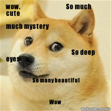 Meme Dog Wow - boktimmen such doge much eyes so many fun