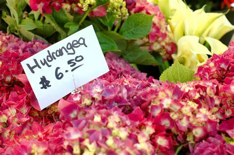 Crop Florist how to start a flower farming business profitable plants