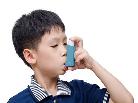 asthma aid children mice may be key to asthma attacks at school