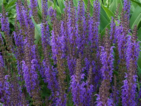 plant with purple flowers majestic purple plants for your garden crasstalk