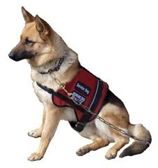 i want to service dogs wish service dogs service dogs for neurological and psychological disorders