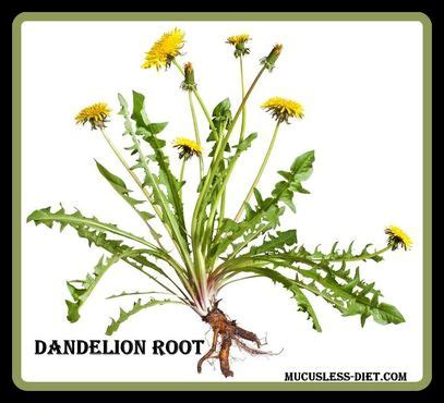 Dandelion Root Detox Benefits by Dandelion Root Tea Benefits Detox Recipes Included The