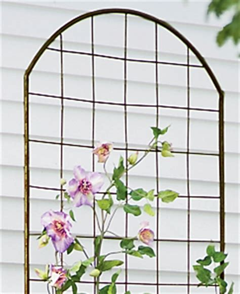 wall supports for climbing plants trellis guide how to choose the best supports for