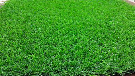 Rumput Swiss By Tukang Rumput jual rumput sintetis jenis golf jual rumput sintetis