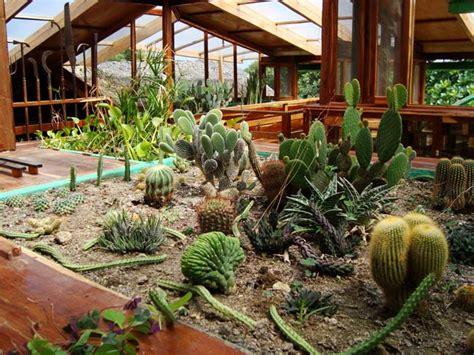imagenes de jardines con cactus jardines de cactus plantas hoy