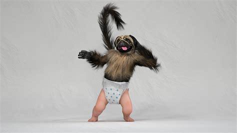 puppy monkey baby new year artstation puppy monkey baby white